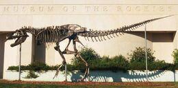 MOR T Rex