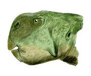 Psittacosaurus major BW
