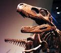 Herrerasaurus 1.jpg