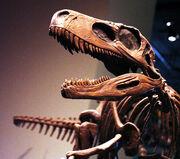 Herrerasaurus 1