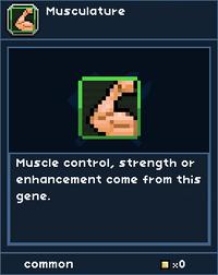 MusculatureGene