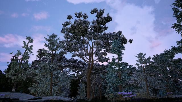 File:Italian Stone Pine2.png