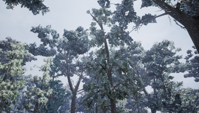 File:Eastern White Pine2.png