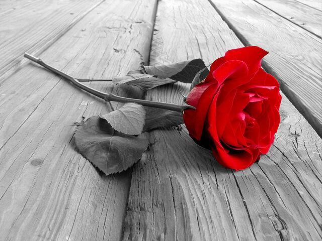 File:Bunga layu.jpg
