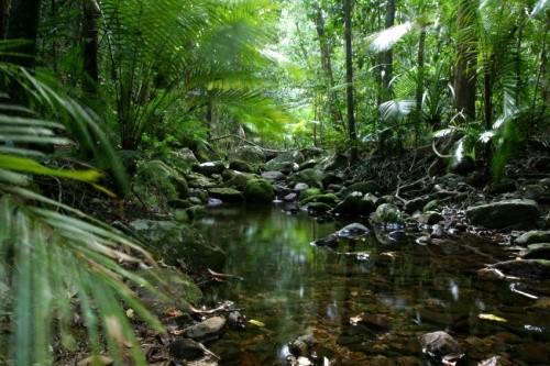 File:Lush rainforest.jpg