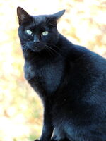 My black cat by bluteisen-d5l1opq