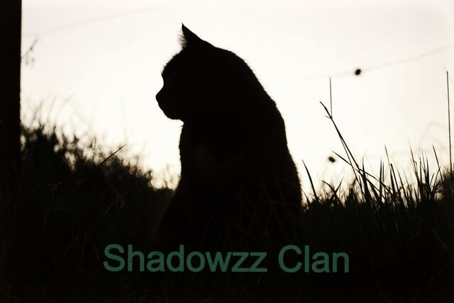File:Shadowzz Clan Flag.jpg
