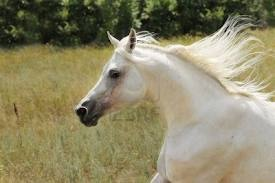 File:Arabian .jpg