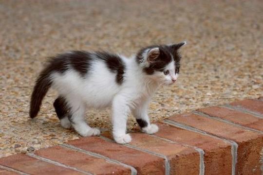 File:Clan cat 1.jpg