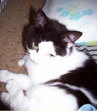 File:Clan Cat 3.jpg