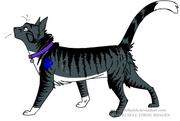 Randomcat