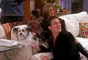 Friends episode154 337x233 032020061513