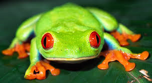 File:Frog 99.png