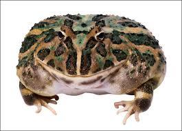 File:Toad .jpg