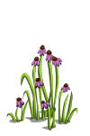 Wildflowers5-icon
