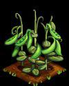 Peas fruit