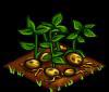 File:Potatoes fruit.png
