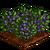 Huckleberry-icon