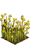 File:Flax fruit.png