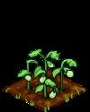 Eggplant green