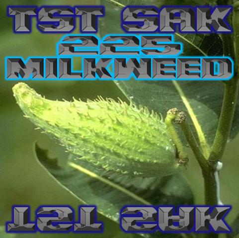 File:225 Milkweed art.png