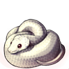 639-leucistic-ball-python