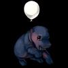 61-gray-hippo