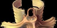 Uncommon Cylinder Beast