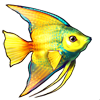 604-tropical-angelfish