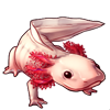 605-pink-axolotl