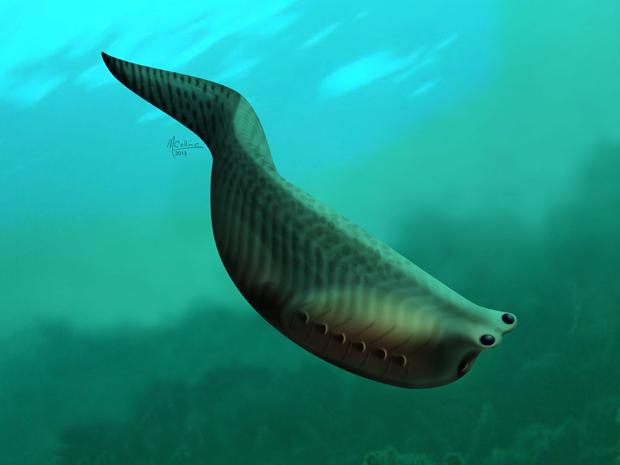 File:Callistonian Eel Fish.jpeg