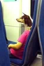 Female Humanoid Dog