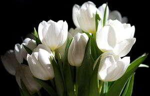 28282f908ec84dc2dc4187ad2a13ceea white-flower-17-pictures-of-white-flower 1867-1200