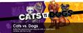 2k10 catsvsdogs whatshotmodule homepage bkgd