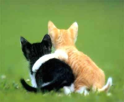 File:Lovecats.jpg