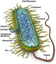 Mycoplasma-9990 0