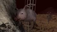 Pigward Norton