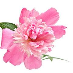 Blossom Talisman