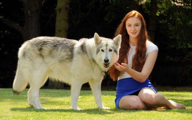 File:Sophie-Turner-With-a-White-Wolf-Game-of-Thrones-Wallpaper.jpg