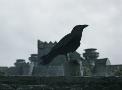 Ravens-Portal