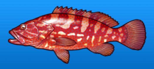 File:Hong kong grouper.png