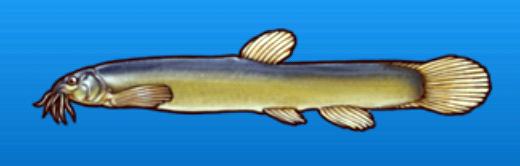 File:Mudfish.png