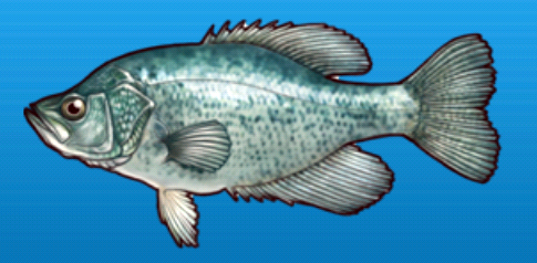 File:Crappie.png