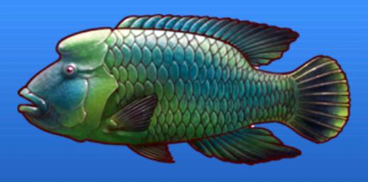 File:Napoleon fish.png