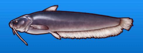 File:Catfish.png