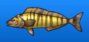 Alaska mackerel