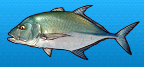 File:Bluefin trevally.png