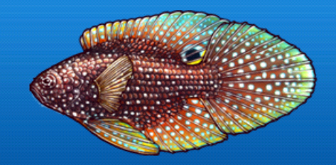File:Marine betta.png
