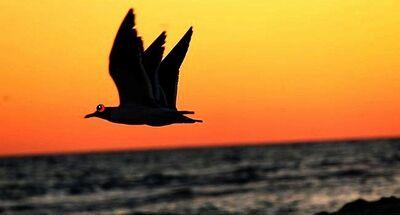 3 wing c