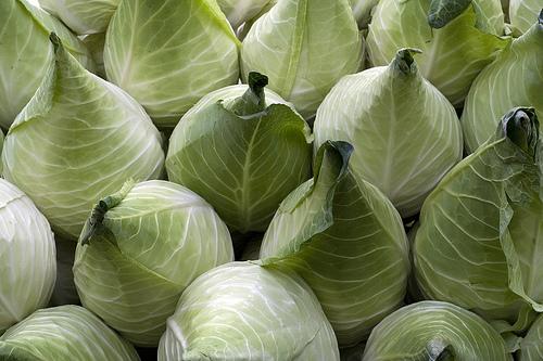 File:Cabbage Filderkraut.jpg